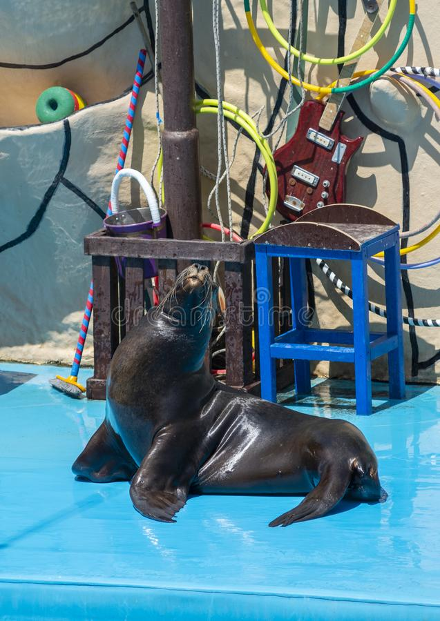Denny lew na scenie w Dolphinarium zdjęcie royalty free