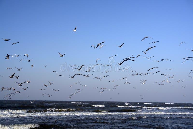 denny lotu ptaka, obraz stock