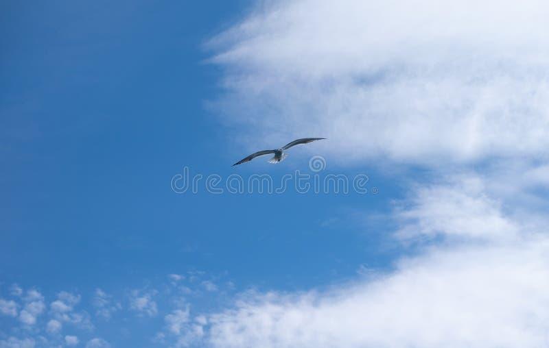 Denny ptak lata nad morzem up w niebie pod dużymi puszystymi chmurami zdjęcia royalty free