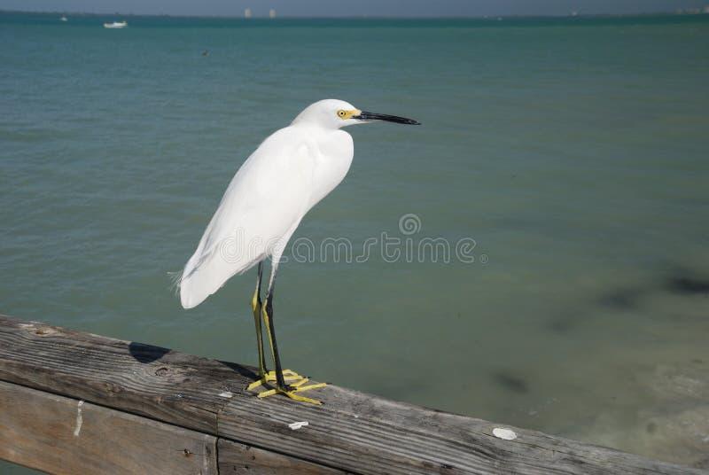 Denny ptak na Sanibel wyspie zdjęcie royalty free