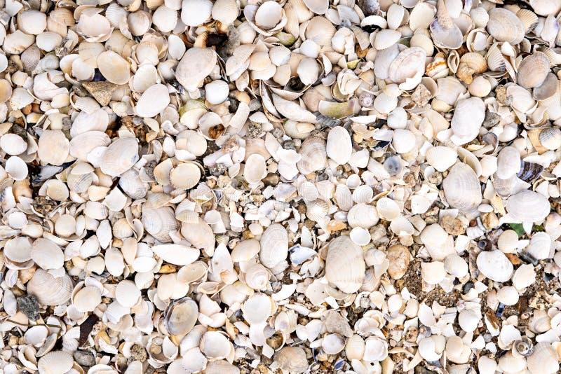 Denny Shell tło na plaży plenerowy obraz stock
