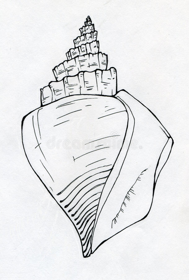 Denny skorupa atramentu nakreślenie ilustracja wektor