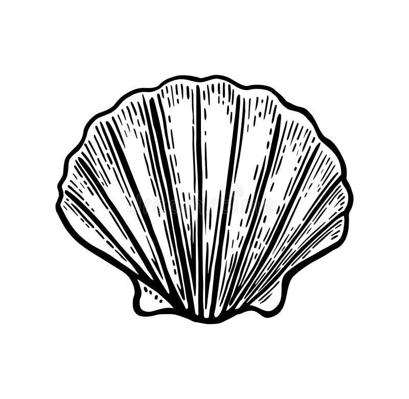 Denny skorupa przegrzebek Czarna rytownictwo rocznika ilustracja pojedynczy białe tło royalty ilustracja