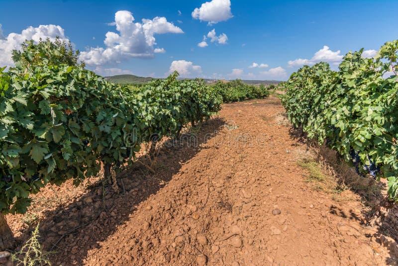 Denominación de los viñedos de origen Los Valles en el condado de Brime de Urz de los valles de Benavente en Zamora Castilla y Le imagenes de archivo