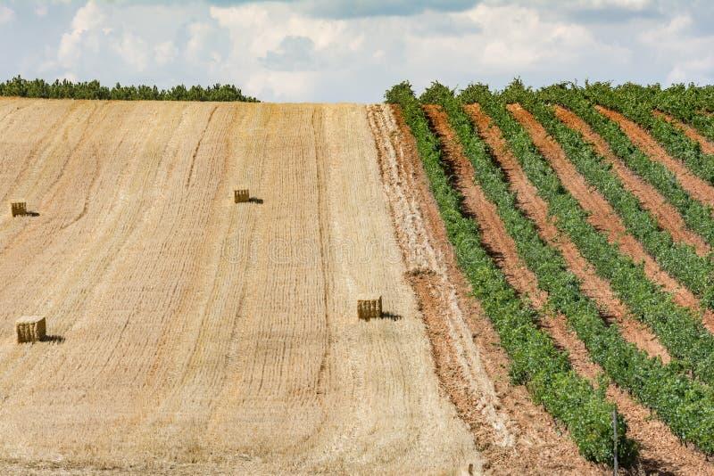 Denominación de los viñedos de origen Los Valles en el condado de Brime de Urz de los valles de Benavente en Zamora Castilla y Le imagen de archivo