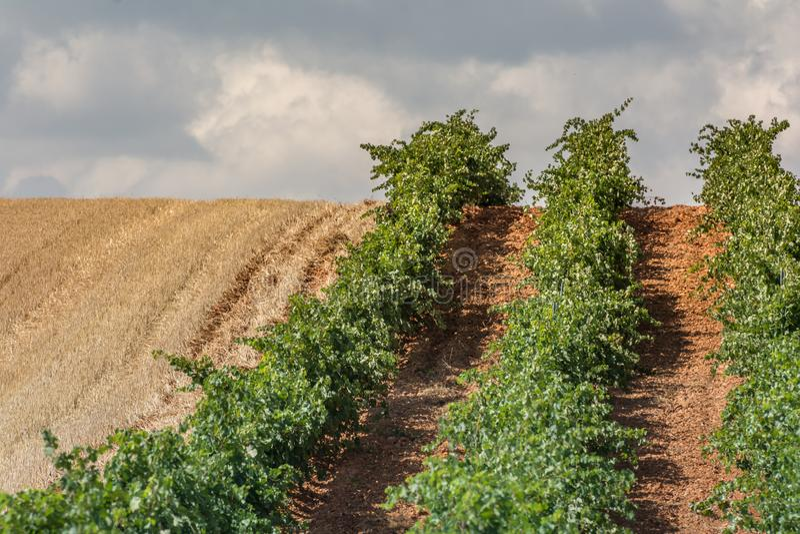 Denominación de los viñedos de origen Los Valles en el condado de Brime de Urz de los valles de Benavente en Zamora Castilla y Le fotografía de archivo libre de regalías