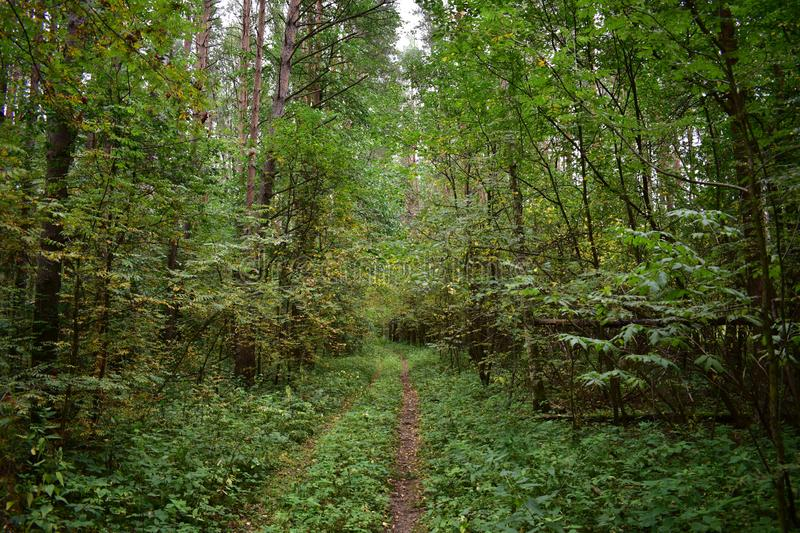 Dense fairy forest road path path cause a sense of peace and comfort in this feeling disappeared grief, forgotten stock photography