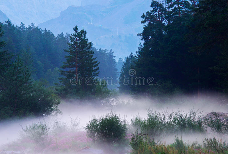 Dense fog stock photos
