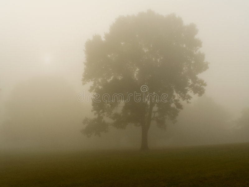Dense Fog royalty free stock photography