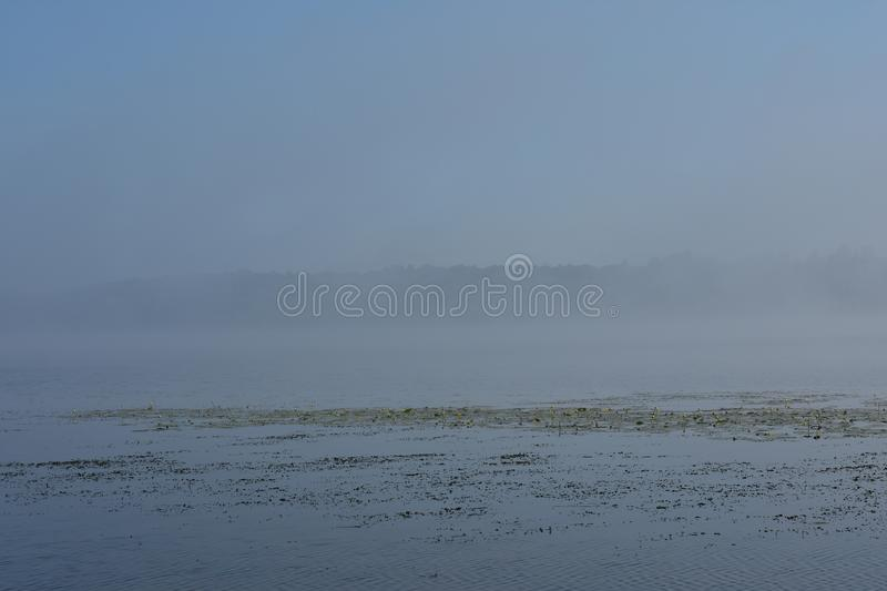 Dense fog over the river, in the distance you can see the forest rows of water lilies. And sedge stock photography