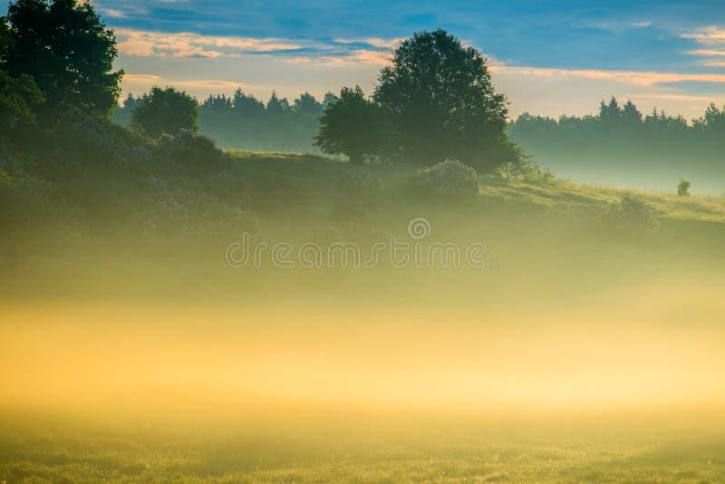 Dense fog at sunrise stock photo