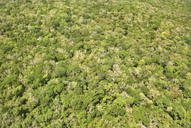 Dense forest. Aerial of dense forest with greenery stock image