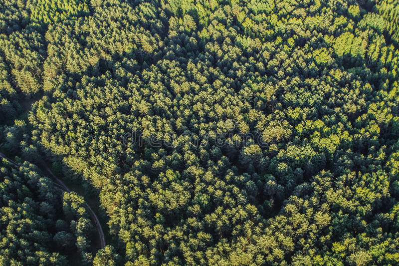 Dense forest. Aerial of dense forest with greenery royalty free stock image