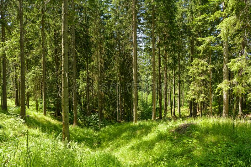 Dense forest close to Cadca in northern Slovakia. On borders with Czech Republic stock photography