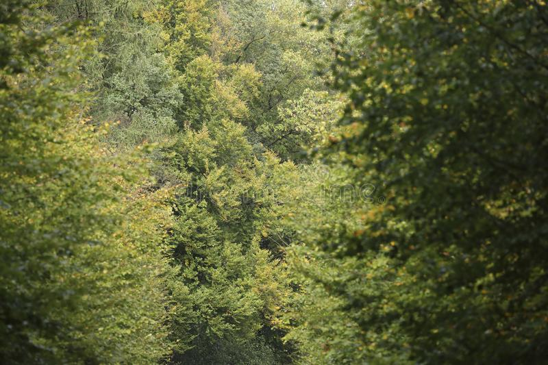 A dense forest. Closeup of a dense forest stock image