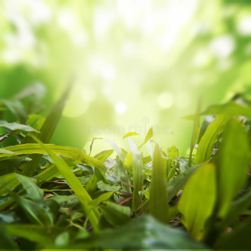 Dense Grasses with Green Nature Background stock photos