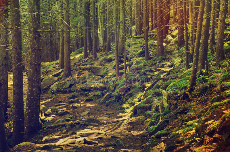 Dense green forest. A dense mistic green forest with mossy stones and path, vintage retro image stock image