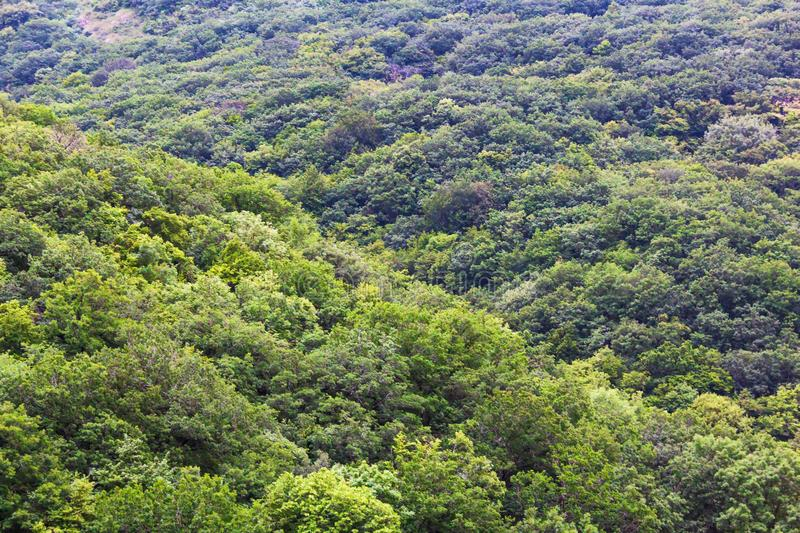 Dense green forest from the top view. Crimean mountains, summertime, landscape royalty free stock photo