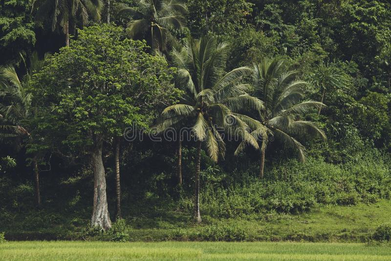 The dense greens of the tropical Asian forest. royalty free stock photography