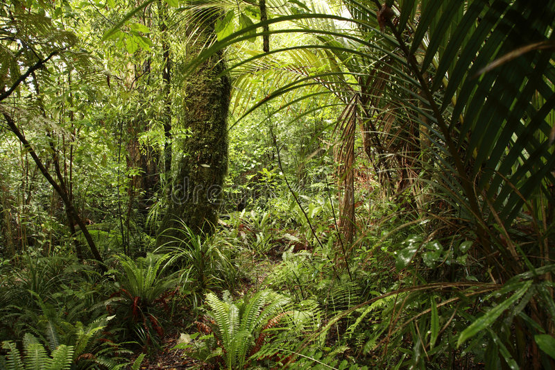 Download Dense jungle stock photo. Image of lush, flora, forests - 2848118