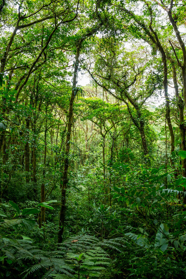 Dense jungle with many trees stock photo