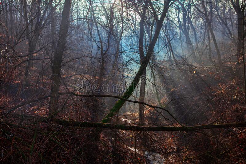 Spring forest in the foggy forest. Dense spring forest in the foggy forest stock images