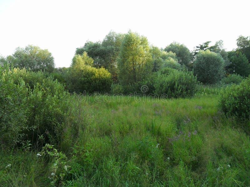 Dense summer forest. Field and dense summer forest stock photos