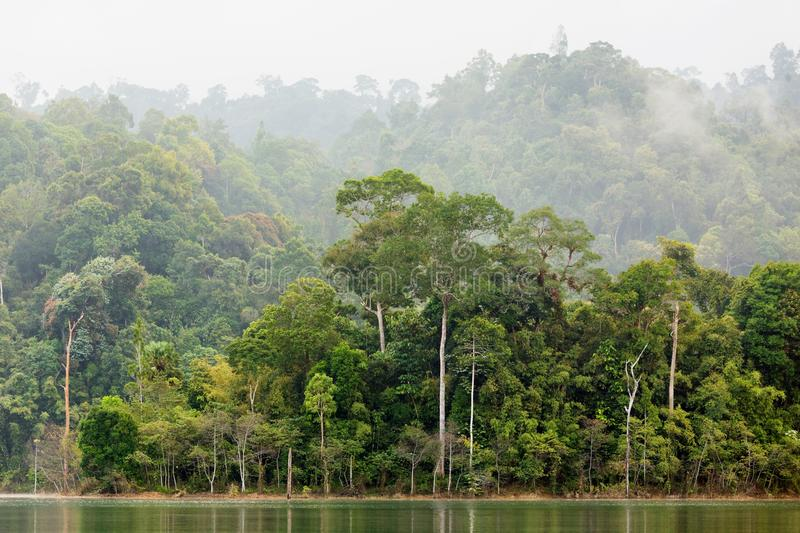 Dense tropical forest. In the Chiew Lan Lake, south Thailand stock photos