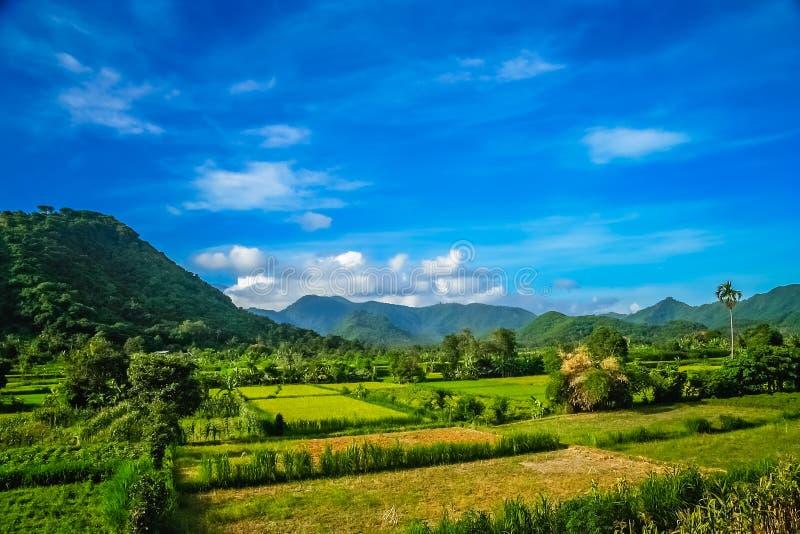 Tropical landscape of Bali stock photo