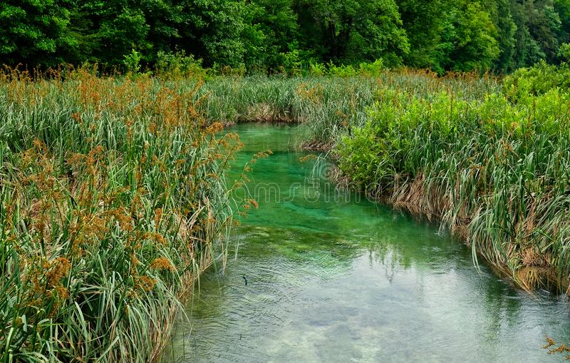 Reeds and Rushes Growing in Plitvice Lakes, Croatia. Dense water weeds, reeds and rushes, growing on the Plitvice Lakes, Plitvice National Park, Croatia stock photos