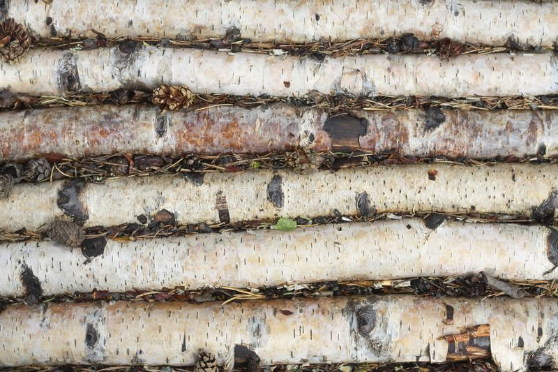 Densely laid out birch logs lie on the earth stock image