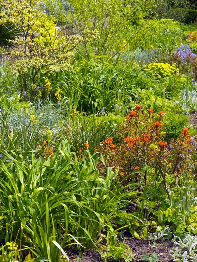 Densely planted spring garden. Border royalty free stock photo