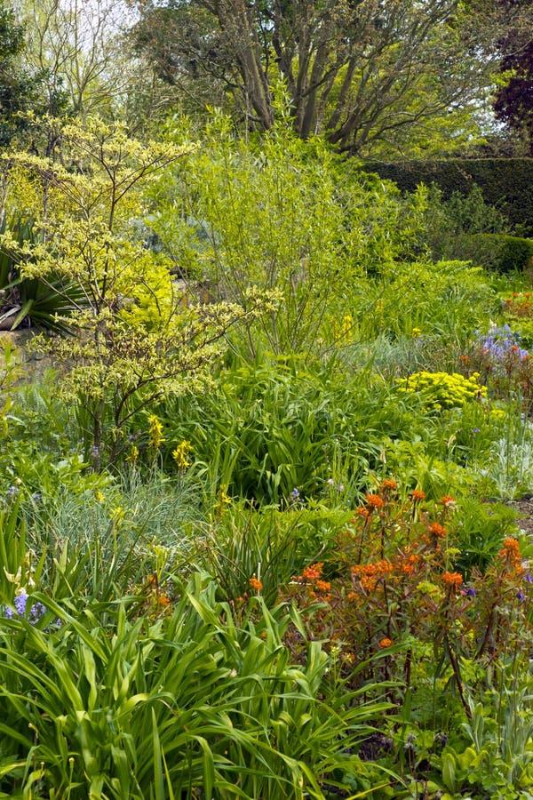 Densely planted spring garden. Border stock images