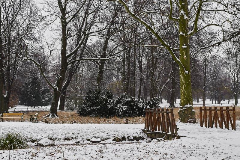 dentäckte träd, buskar och bron över liten ström i stad parkerar i morgonen arkivfoton