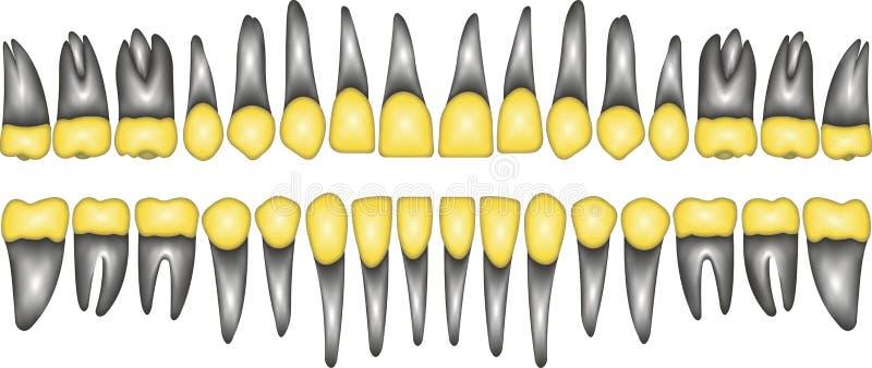 dent de couronne de l'or 3D illustration stock