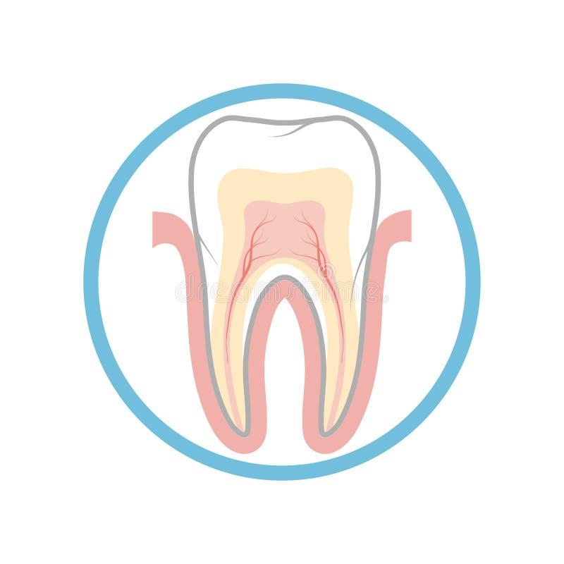 Dent médicale d'affiche illustration stock