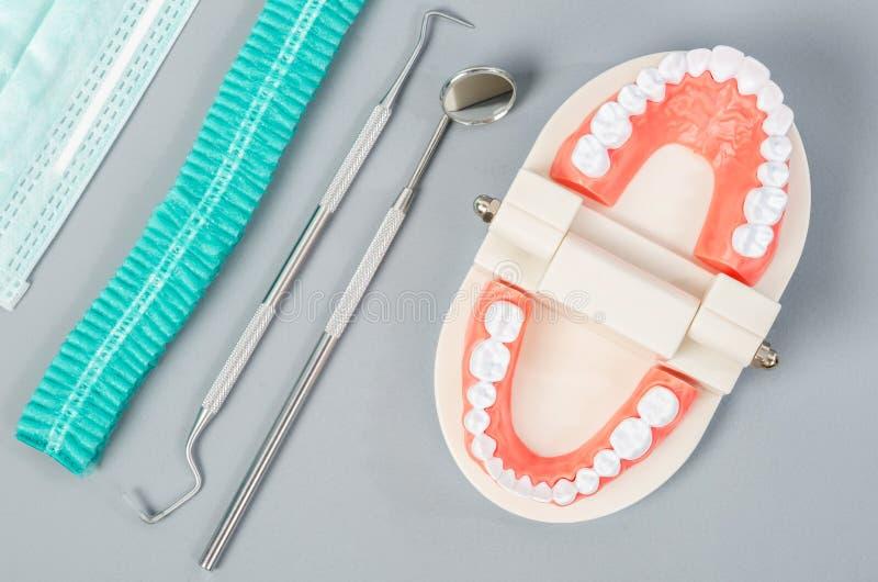 Dent modèle avec les outils dentaires image libre de droits