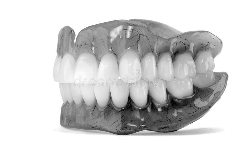 dentaduras Aislante en la prótesis de acrílico del fondo blanco del huma imagen de archivo