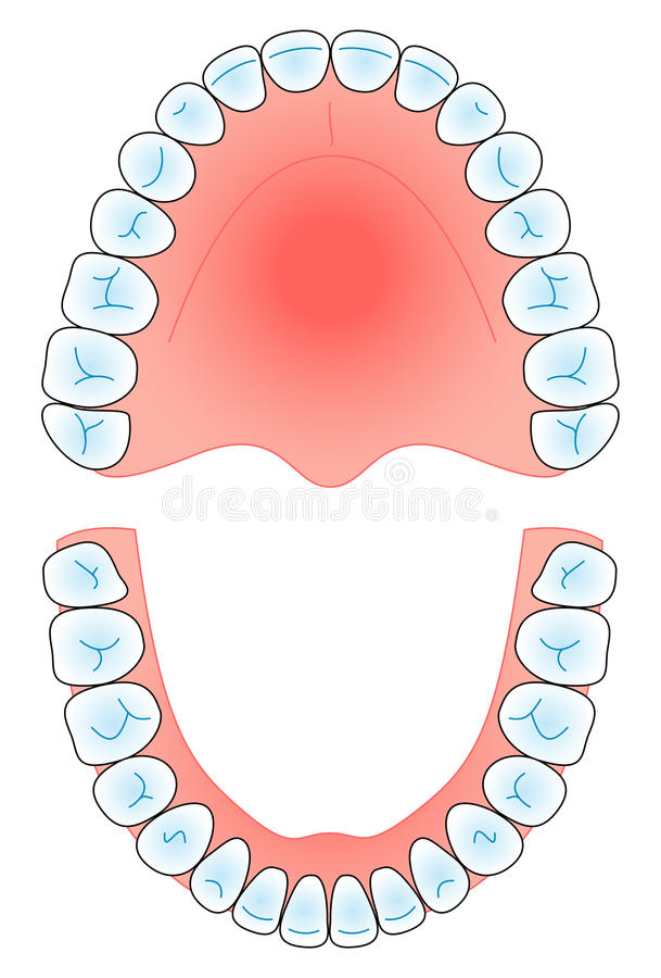 Dental arch stock illustration