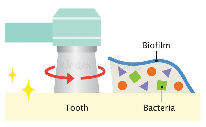 Biofilm Stock Illustrations – 230 Biofilm Stock Illustrations