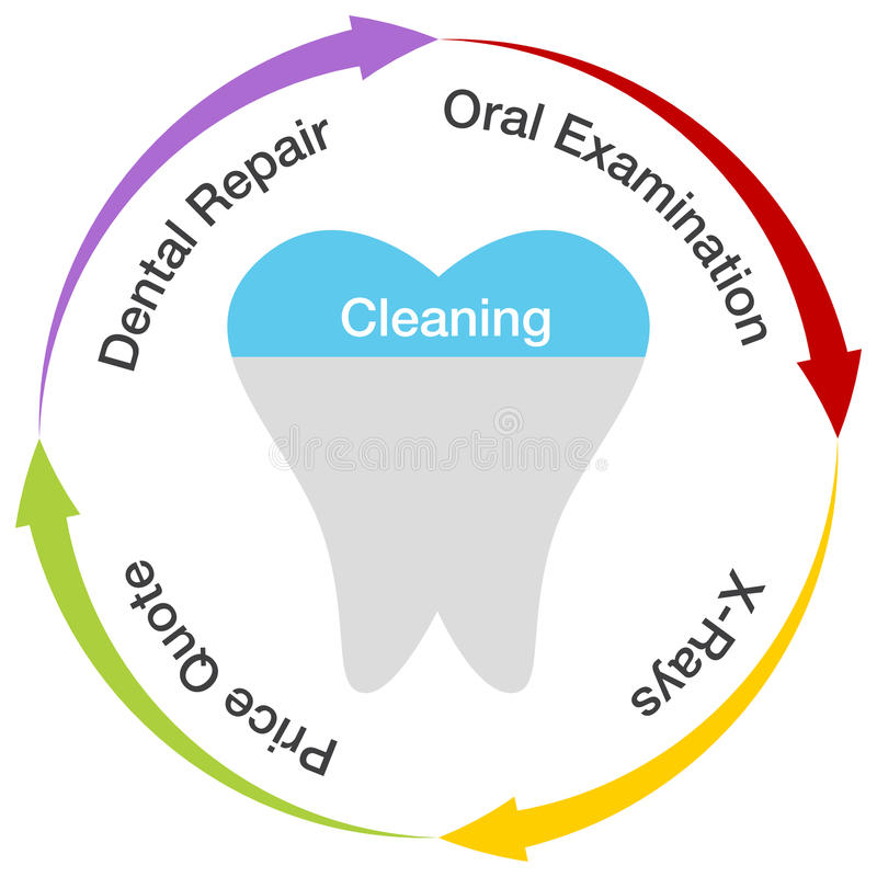Dental Chart. An image of a dental chart royalty free illustration