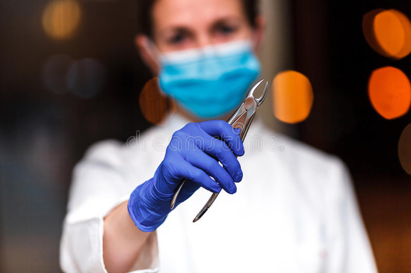 Dental and endodontic instruments in hands of dentist. The dentist women in blue gloves holding metal professional tools royalty free stock image