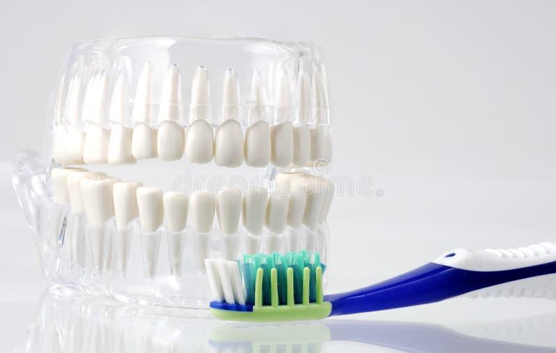 Dental Hygiene stock photos