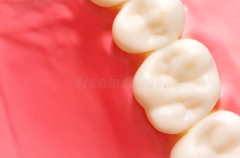 Download Dental model stock image. Image of oral, canine, medicine - 29620927