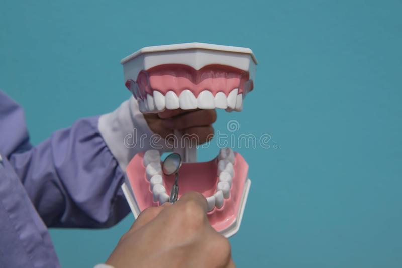 The dental model is used to teach how to check the cleanliness of the teeth by the doctor. Blue background stock photos