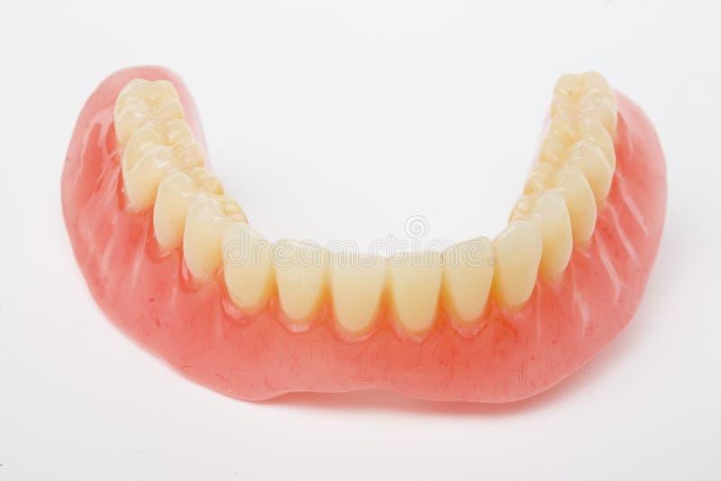 Dental prosthesis. On white background stock images