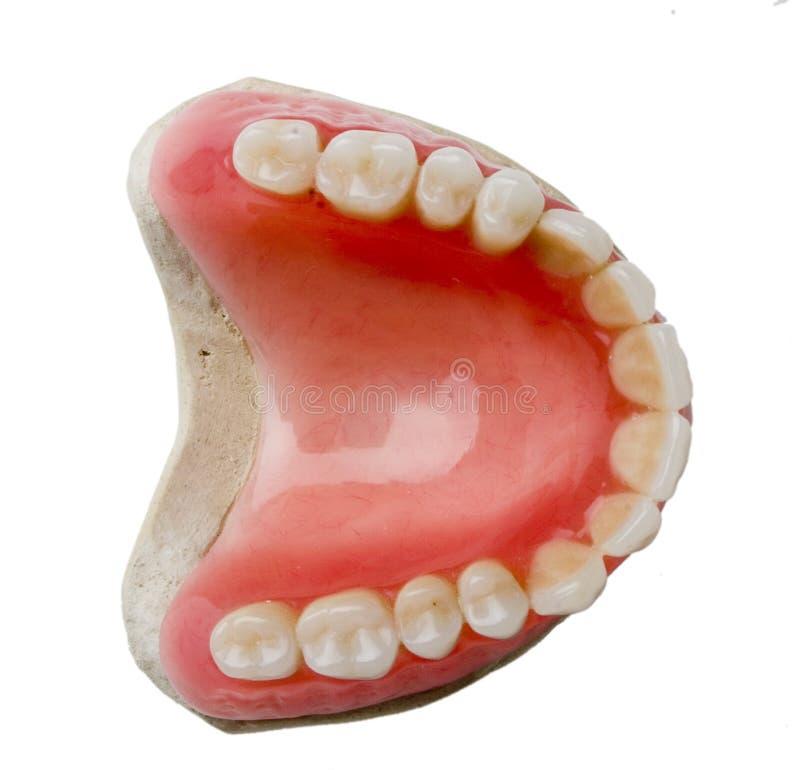 Dental prosthesis. On white background stock image