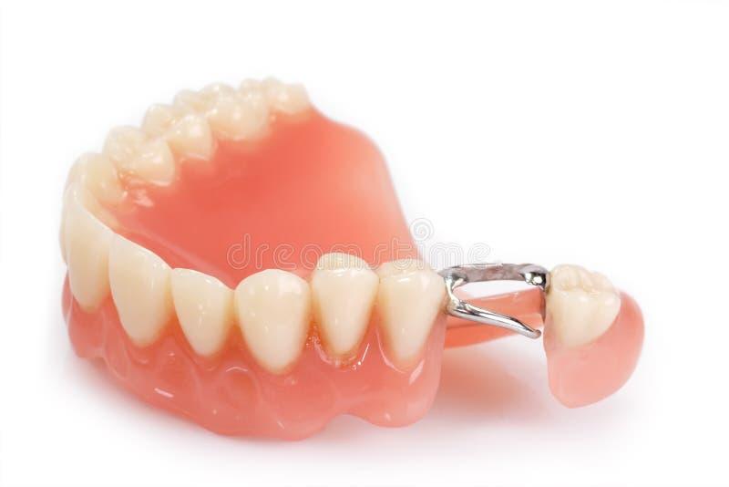Dental prosthesis. On bright background royalty free stock photos