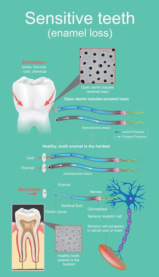 Dental sensible libre illustration