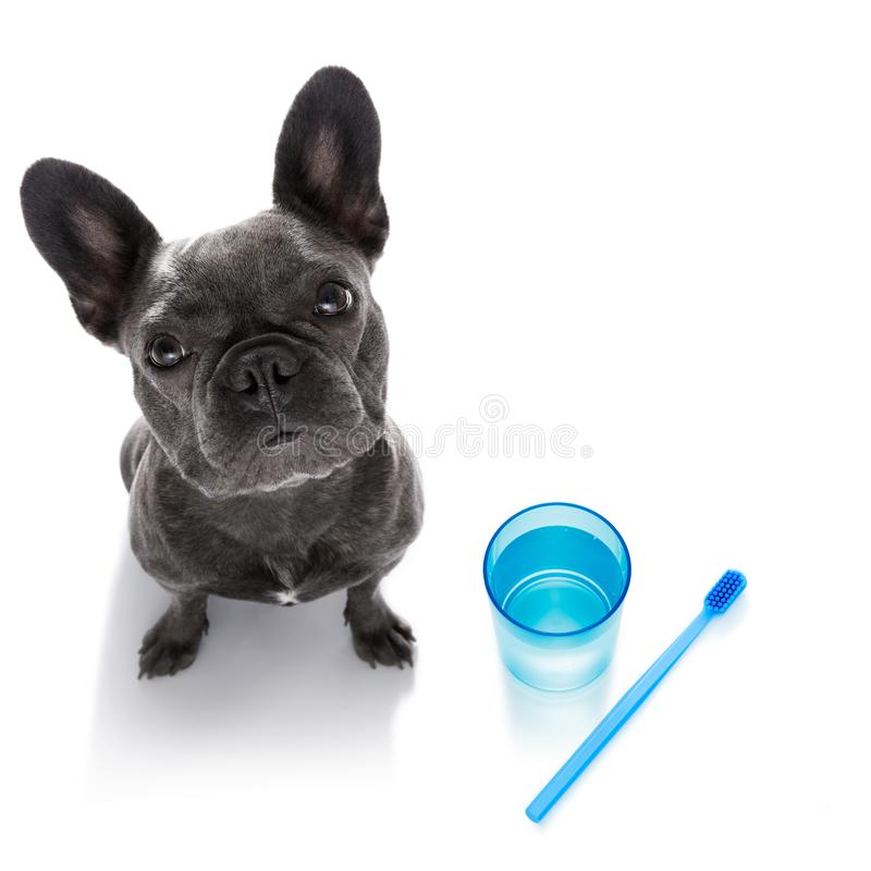 Dental toothbrush dog royalty free stock photography